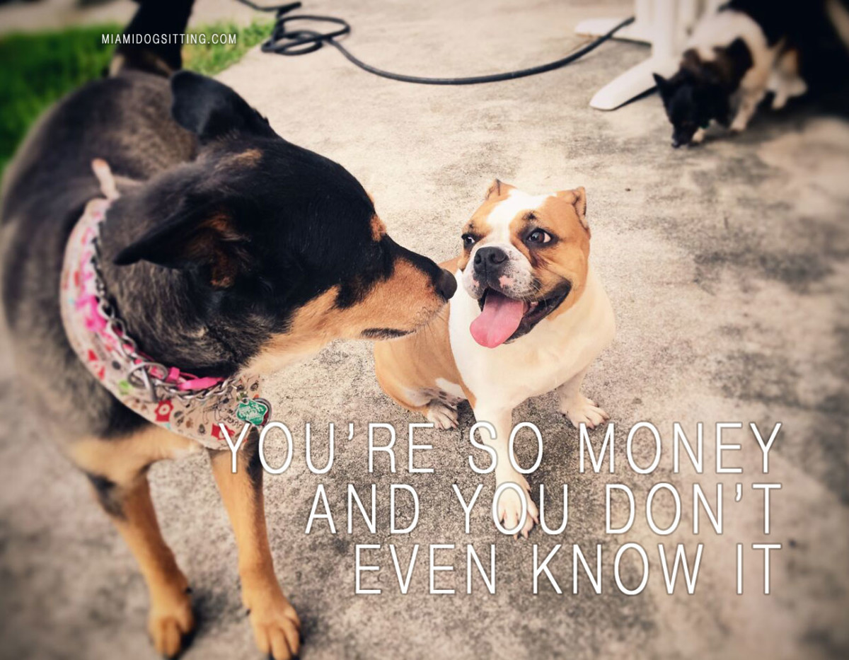 Miami's Fun Holistic Home Boarding & Daycare what happens in the dog park stays in the dog park