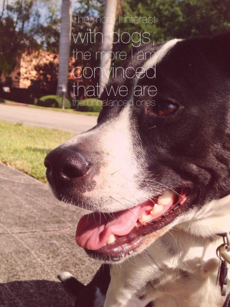 Miami's Fun Holistic Home Boarding & Daycare roam free miamidogsitting.com canine meditation boarding #DogsAreCool #Instagram #MiamiDogSitting.com
