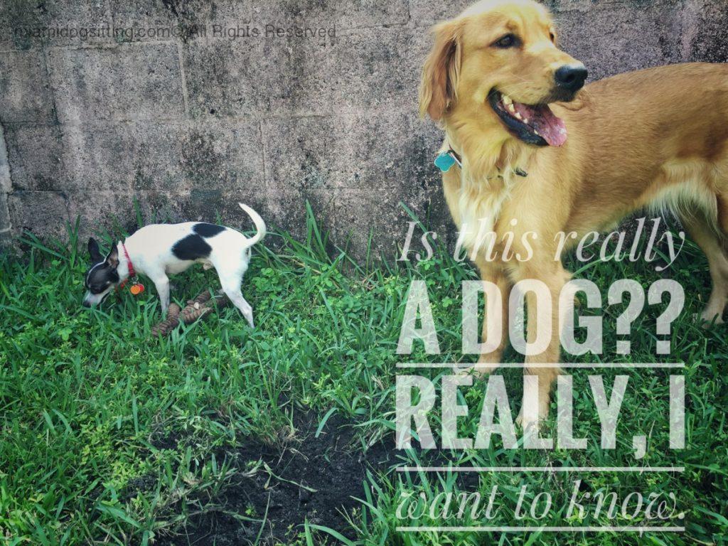 Miami's Fun Holistic Home Boarding & Daycare #DogsOfTwitter #DogsAreCool #Instagram #MiamiDogSitting.com #DogsAreCool