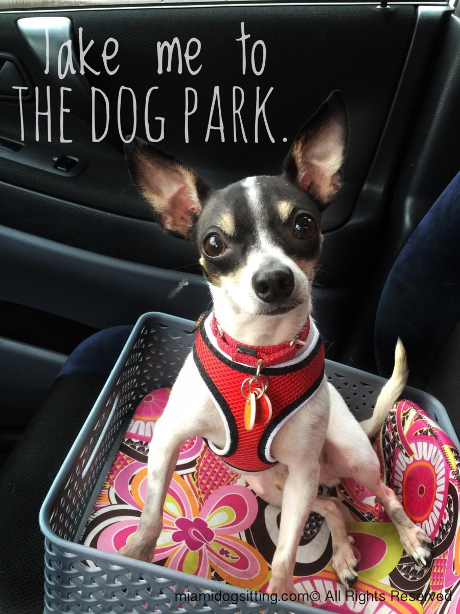 Miami's Fun Holistic Home Boarding & Daycare roam free no bad dog good dog dogs boarding #DogsAreCool