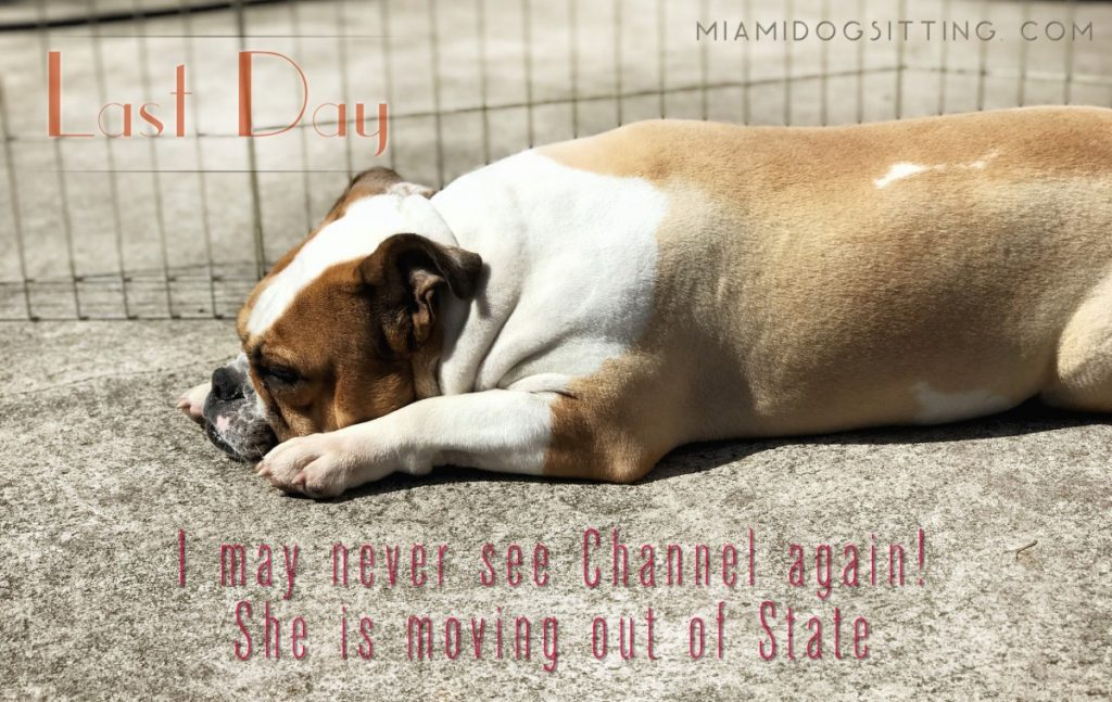 Miami's Fun Holistic Home Boarding & Daycare dog daycare dog boarding Miami cage-free boarding #DogsAreCool dogs miamidogsitting.com